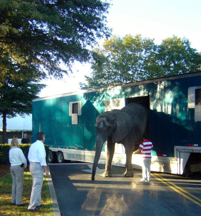 The elephants had to get out a little earlier than expected…