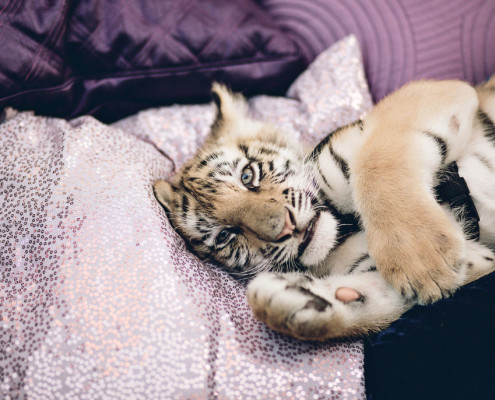 Baby tigers created the perfect event buzz. Guests were able to play with the cats as well take selfies. It was the most instragramed piece of the event.